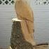 Weißkopfadler aus Fichtenholz_1